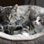 可愛いネコハラが流行!?リモートワーク急増で猫の甘えが加速中?